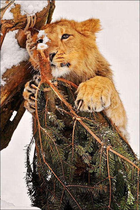 В паре со снеговиком