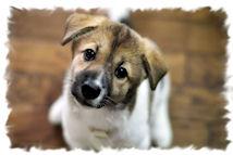 2018 год Собаки по китайскому календарю