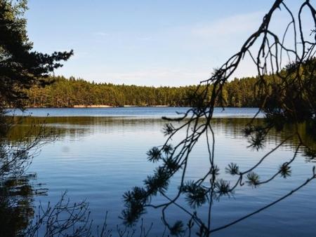 В Кингисеппском районе создан заповедник «Восток Финского залива»